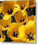 Golden Tulips In Full Bloom Metal Print