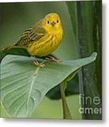 Yellow Warbler Metal Print