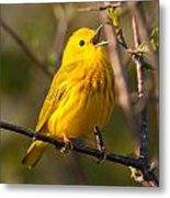 Yellow Warbler Singing Metal Print
