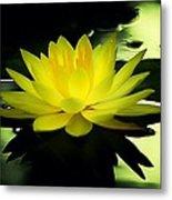 Yellow Waterlily Nc Metal Print