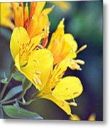 Yellow Wild Flowers Metal Print