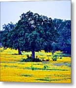 Yellow Wildflowers After Sunrise Metal Print