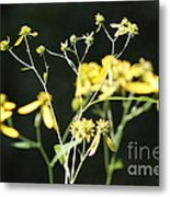 Yellow Wildflowers Metal Print