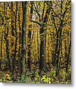 Yellow Woods On A Rainy Day Metal Print