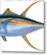 Yellowfin Tuna Metal Print