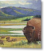 Yellowstone Bison Metal Print