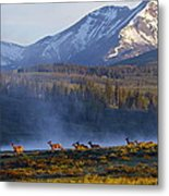 Yellowstone Morning Metal Print