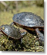 Yoga Turtles Metal Print