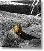 Young Bird Exploring Metal Print