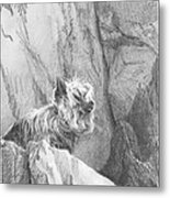 Yorkie Dog On A Cliff Pencil Portrait Metal Print