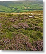 Yorkshire Moors Heather Metal Print