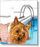 Yorkshire Terrier - This Is The Life Metal Print