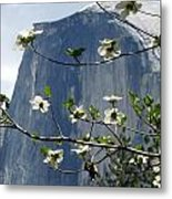 Yosemite Dogwood And Half Dome Metal Print