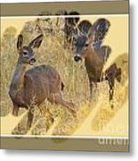 Yosemite National Park - Deer Metal Print