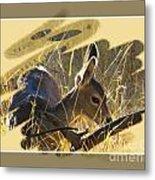 Yosemite Np Wildlife - Doe Metal Print