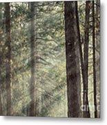 Yosemite Pines In Sunlight Metal Print