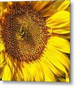 You Are My Sunshine Metal Print