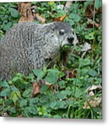 You Looking At Me? Metal Print