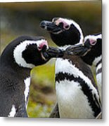 You May Kiss The Bride - Penguins Metal Print