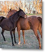 You Scratch My Back And I'll Scratch Yours Metal Print