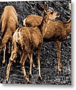 Young And Hungry Sc Metal Print