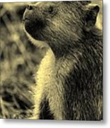 Young Baboon In Black And White Metal Print