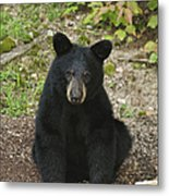 Young Bear 1 Metal Print