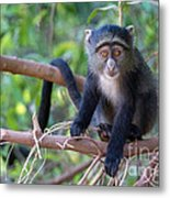 Young Blue Monkey Metal Print