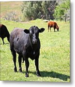 Young Bull Along The Rolling Hills Landscape Of The Black Diamond Mines In Antioch Calif 5d22352 Metal Print by Wingsdomain Art and Photography