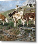 Young Cattle In Tyrol Metal Print