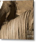 Young Colts Metal Print