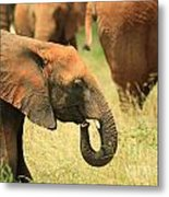 Young Elephant Metal Print