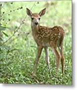 Young Fawn In The Woods Metal Print