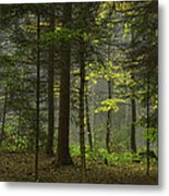 Young Forest Metal Print