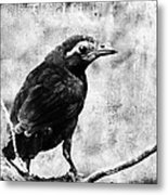Young Grackle Metal Print