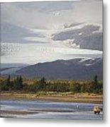 Young Grizzly Fishing At Hallo Bay Metal Print