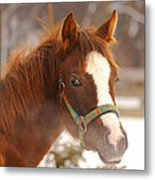 Young Horse In Winter Day Metal Print