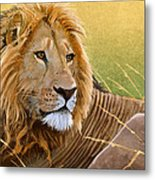 Young Lion Metal Print by Aaron Blaise