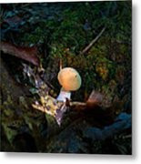 Young Lonely Mushroom 2 Metal Print