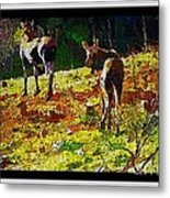 Young Moose In Autumn Metal Print