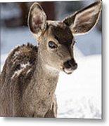Young Mule Deer Fawn In Yosemite National Park Metal Print