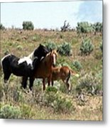 Young Mustang Band Metal Print
