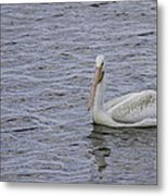 Young Pelican Metal Print