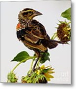 Young Redwing In The Wind Metal Print