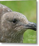 Young Seagull Metal Print