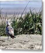 Young Seagull No. 1 Metal Print
