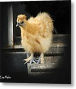Young Silkie Metal Print