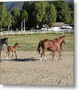 Young Thoroughbrerds  Metal Print