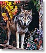 Young Timber Wolf Metal Print