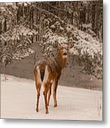 Young White Tailed Buck In Winter Metal Print